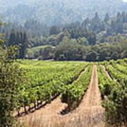Sonoma Vineyards In The Sonoma California Wine Country 5d24515 Art Print