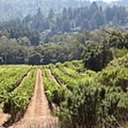 Sonoma Vineyards In The Sonoma California Wine Country 5d24518 Art Print