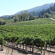 Sonoma Vineyards In The Sonoma California Wine Country 5d24541 Art Print