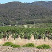 Sonoma Vineyards In The Sonoma California Wine Country 5d24602 Art Print