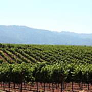 Sonoma Vineyards In The Sonoma California Wine Country 5d24623 Art Print