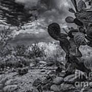 Sonoran Desert 15 Art Print