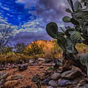 Sonoran Desert 54 Art Print