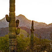 Sonoran Desert II Art Print by Robert Bales