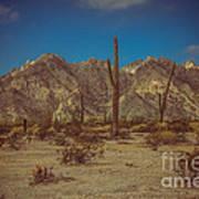 Sonoran Desert Art Print