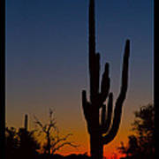 Sonoran Desert Sunrise Poster Print Art Print