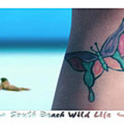South Beach Wild Life Print by Mike McGlothlen