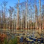 South Carolina Swamps Art Print