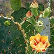 South Texas Prickly Pear Art Print
