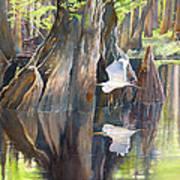 Southeast Missouri Swamp Art Print