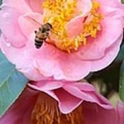 Southern Bee Art Print