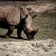 Southern Black Rhino Art Print