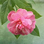 Southern Camellia Flower Art Print