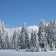 Southern Oregon Forest In Winter Art Print