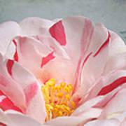 Southern Peppermint Beauty Art Print