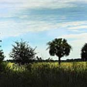 Southern Serenity Art Print