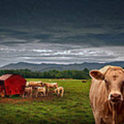 Southern Steer Art Print by William Schmid