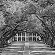 Southern Time Travel Bw Art Print by Steve Harrington