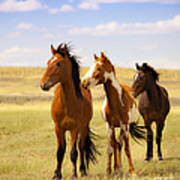 Southwest Wild Horses On Navajo Indian Reservation Art Print