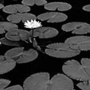Space Lily Art Print