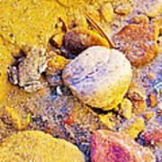Spadefoot Toad Near Stones On Capitol Gorge Pioneer Trail In Capitol Reef National Park-utah Art Print