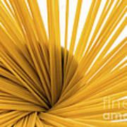 Spaghetti Spiral Art Print