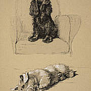 Spaniel And Sealyham, 1930 Art Print