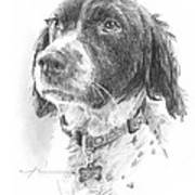 Spaniel Dog Pencil Portrait Art Print