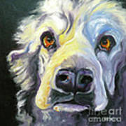 Spaniel In Thought Art Print