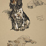 Spaniel, Pekinese And Chow, 1930 Art Print