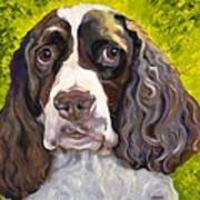 Spaniel The Eyes Have It Art Print by Susan A Becker