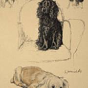 Spaniels, 1930, Illustrations Art Print