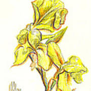 Spanish Irises Art Print