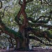 Spanish Moss Draped Limbs Art Print
