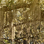 Spanish Moss On Live Oaks Art Print by Christine Till