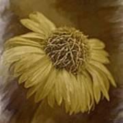 Sparkling Daisy Art Print