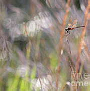 Sparkling Morning Sunshine With Dragonfly Art Print