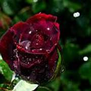Sparkling Red Rose Art Print