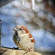 Sparrow 5   Art Print