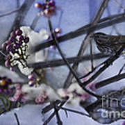 Sparrow And The Beauty Berry Art Print