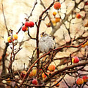 Sparrow In A Crab Apple Tree Art Print