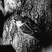 Sparrow On A Tree Art Print