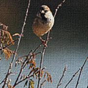 Sparrow On A Twig Art Print