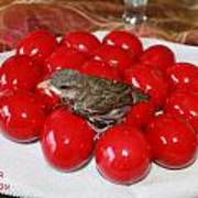 Sparrow On Red Eggs Art Print