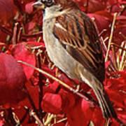 Sparrow Print by Rona Black