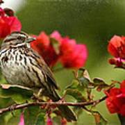 Sparrow Song 8 Art Print