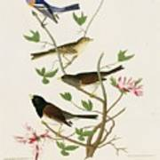 Sparrows And Bunting Art Print