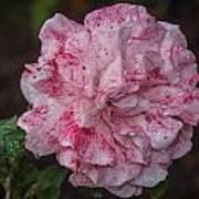 Speckled Rose Art Print