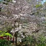 Spectacular Japanese Garden Art Print