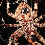 Spider - Hairy Art Print